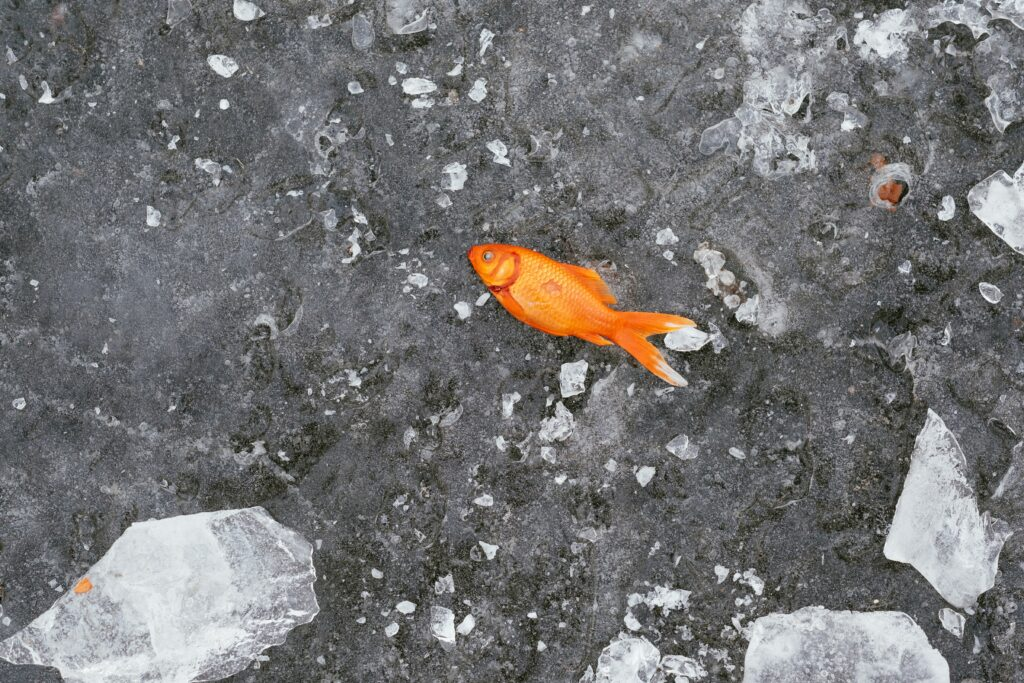 gold fish on a grey surface